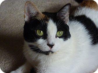 Domestic Shorthair Cat for adoption in Richmond, Virginia - Emma