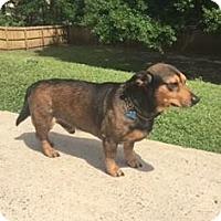 Adopt A Pet :: Tobey - Baton Rouge, LA