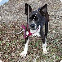 Adopt A Pet :: Roscoe - Patterson, NY