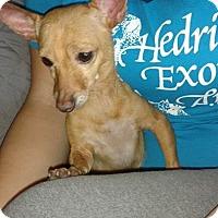 Adopt A Pet :: Kika - Chicago, IL