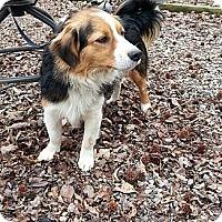 Adopt A Pet :: Rascal - Staunton, VA