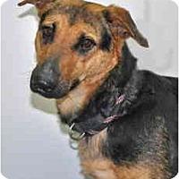 Adopt A Pet :: Mandy - Port Washington, NY