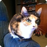 Adopt A Pet :: Flora - Vancouver, BC