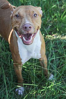 American Pit Bull Terrier Dog for adoption in Jackson, Mississippi - Nikki Minaj