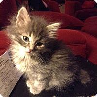 Adopt A Pet :: Tonya - Edmonton, AB
