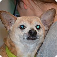 Adopt A Pet :: Tobias - Lafayette, IN