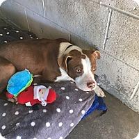 Adopt A Pet :: HARLEY - Powellsville, NC