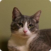 Adopt A Pet :: Smokie - Hastings, NE
