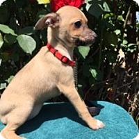 Adopt A Pet :: JACI - Elk Grove, CA