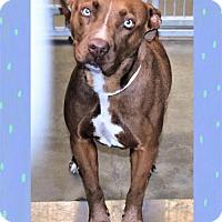 Adopt A Pet :: China - San Jacinto, CA