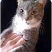 Adopt A Pet :: Sissy - Arlington, VA