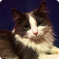 Adopt A Pet :: Duchess - Calgary, AB