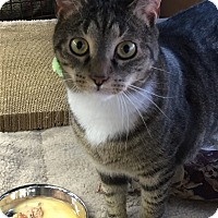 Adopt A Pet :: Ellie - Horsham, PA