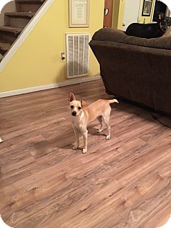 Terrier (Unknown Type, Small) Mix Dog for adoption in Hohenwald, Tennessee - Rosco