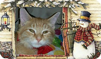Domestic Mediumhair Cat for adoption in Washington, North Carolina - LEO