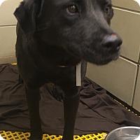 Adopt A Pet :: Freida - Fort Collins, CO