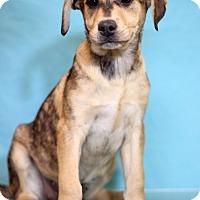 Adopt A Pet :: Dancer - Waldorf, MD