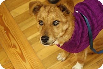 Labrador Retriever/Terrier (Unknown Type, Medium) Mix Dog for adoption in Homewood, Alabama - Gidget