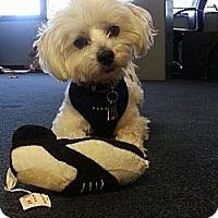 Adopt A Pet :: Toby - Rancho Mirage, CA