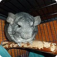 Adopt A Pet :: Hope - Jacksonville, FL