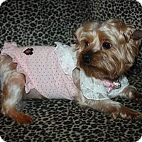 Adopt A Pet :: Josie - Statewide and National, TX