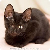 Adopt A Pet :: Emile - Fountain Hills, AZ