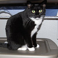 Adopt A Pet :: Mallow - Brainardsville, NY