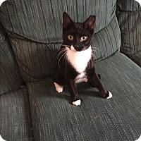 Adopt A Pet :: Aries - Hampton, VA