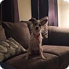 Adopt A Pet :: Hubert