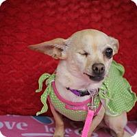 Chihuahua/Dachshund Mix Dog for adoption in Houston, Texas - Ida