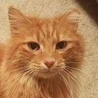 Adopt A Pet :: Redford - Cincinnati, OH