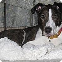 Adopt A Pet :: Sophie - Minnetonka, MN