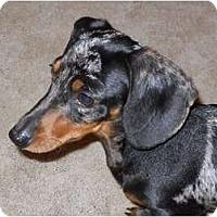 Adopt A Pet :: Willa - Bryan, TX