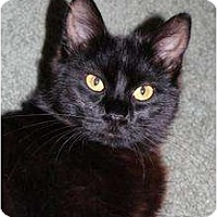 Adopt A Pet :: Cannon - Justin, TX