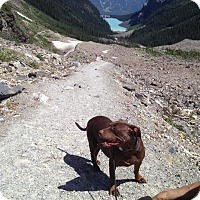 Adopt A Pet :: Misty - Calgary, AB