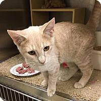 Adopt A Pet :: Dixby - Colmar, PA