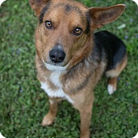 Adopt A Pet :: Levi - Drumbo, ON