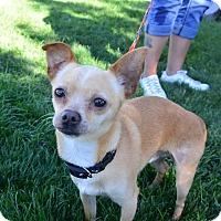 Adopt A Pet :: Carson - Meridian, ID