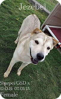 Shar Pei/German Shepherd Dog Mix Dog for adoption in DeForest, Wisconsin - Jezebel