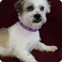 Adopt A Pet :: Castle Barkley - Urbana, OH