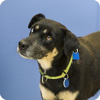 Australian Shepherd Mix Dog for adoption in Houston, Texas - Bonnie