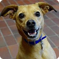 Adopt A Pet :: Huck - Des Moines, IA