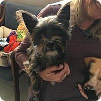 Adopt A Pet :: Chika - Visalia, CA