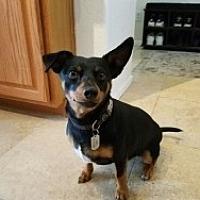 Adopt A Pet :: Derek - Mesa, AZ