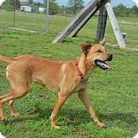 Adopt A Pet :: Howdy/Stix - Broken Arrow, OK