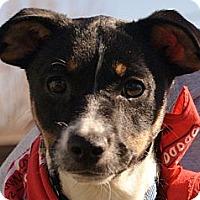 Adopt A Pet :: LADYBUG-SIBLING TO GABE! - Bluff city, TN
