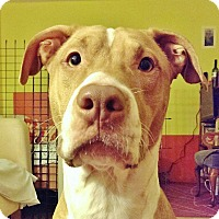 Adopt A Pet :: Minga - Reisterstown, MD