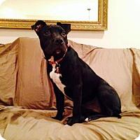 Adopt A Pet :: Maizey - Dublin, OH