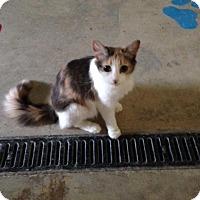 Adopt A Pet :: Lotus - Hamilton, ON