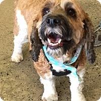 Adopt A Pet :: Jacque--adoption pending - Sacramento, CA